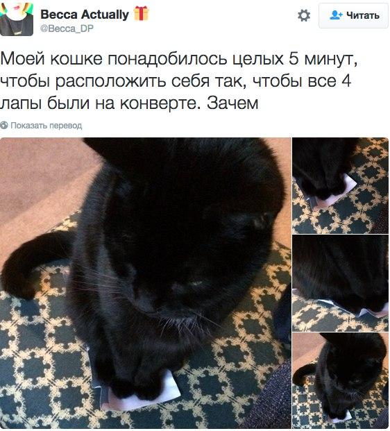 Лучшие твиты о котах 2016