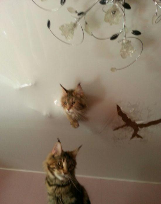 http://sivator.com/uploads/posts/2017-02/1488267835_cats_03.jpg
