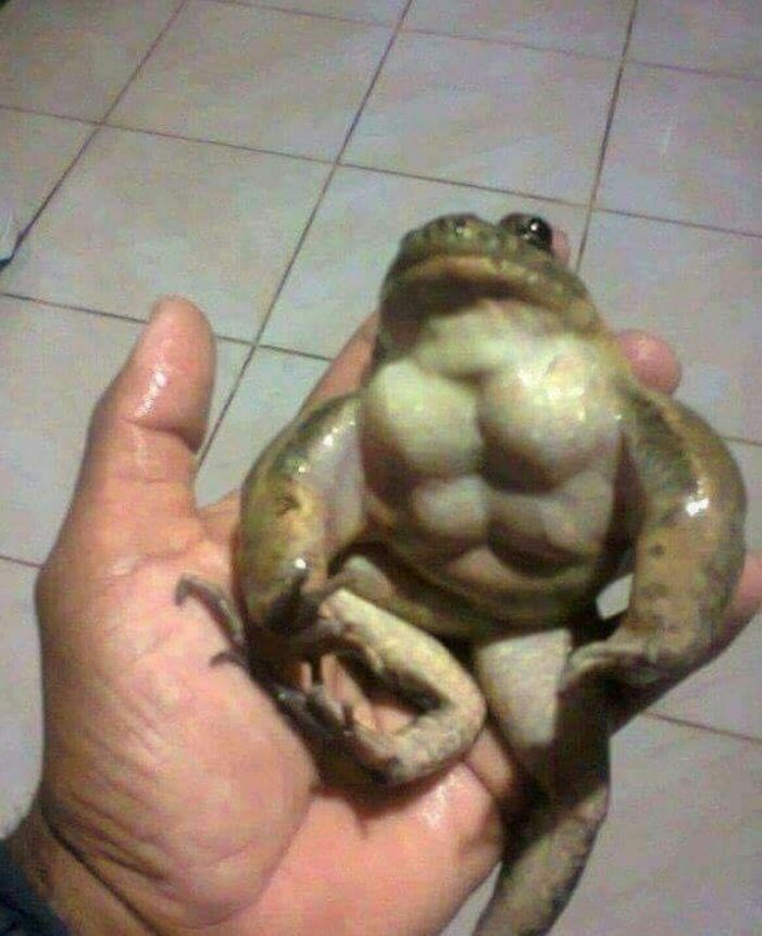 Battle toad?