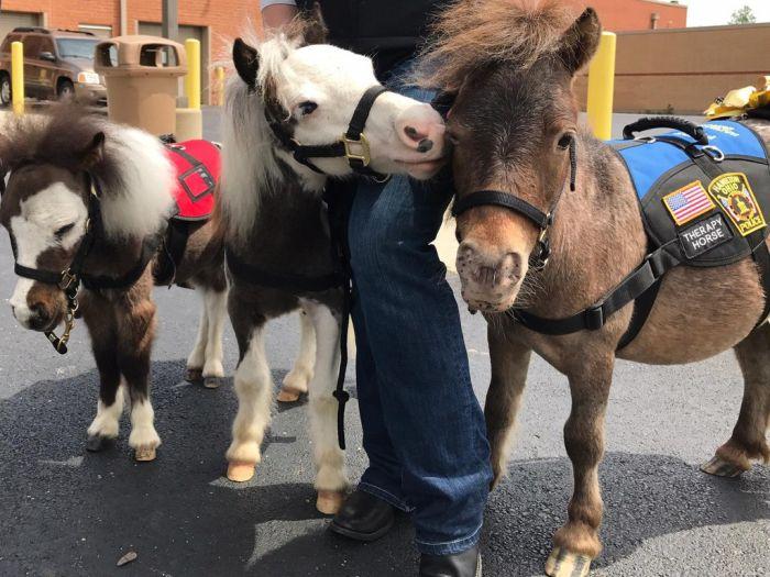 Миниатюрные лошади помогают пассажирам аэропорта бороться с боязнью перелетов