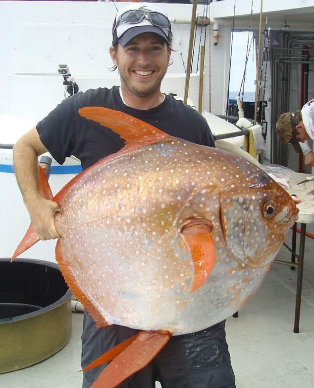 Рыбак выловил редкую опаху весом 40 кг