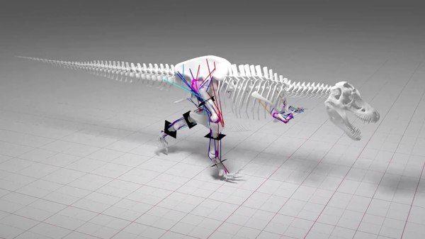 Тираннозавр рекс не мог бегать