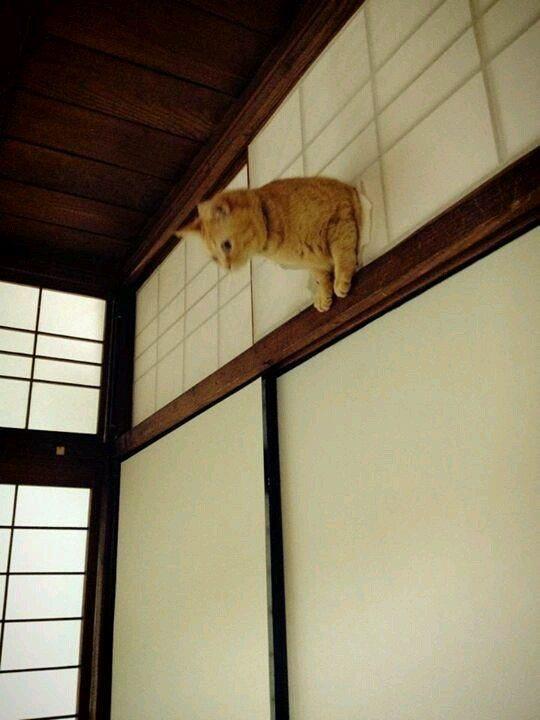 Двери для котов автоматические