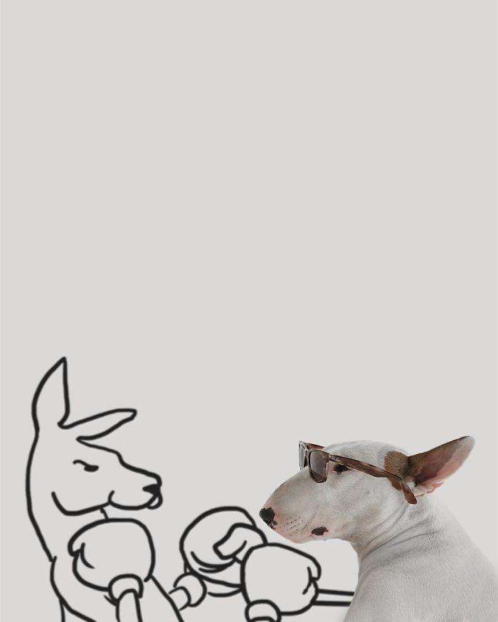 Бультерьер картинки с надписями, прикольные смешные мультфильмы